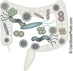 intestine., fungus, dysbiosis, vrijstaand, illustratie,...