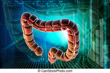 intestino grueso
