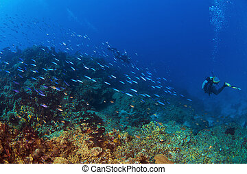 Into the Deep in St Lucia - Diver going deep in St. Lucia