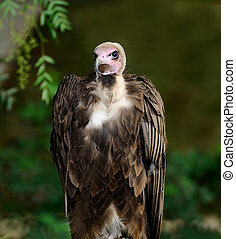 Into the Eyes of A Vulture