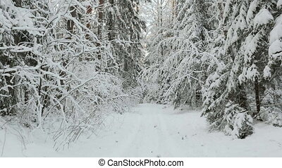 Into the winter forest