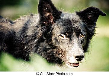 intressant, blick, hund