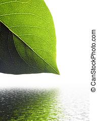 inundação, folha, efeito, isolado