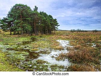 inundado, heathland, paisaje de invierno