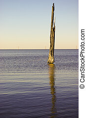 Inundated Tree - A dead cypress tree fights the rising water...