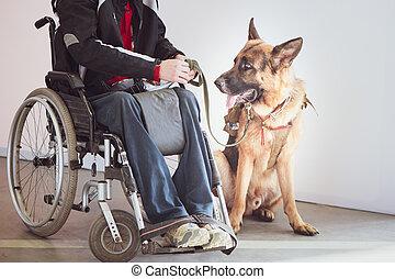 invalide, service, berger, fauteuil roulant, utilisateur, chien, propriétaire