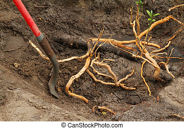 Invasive Roots - Digging out invasive roots
