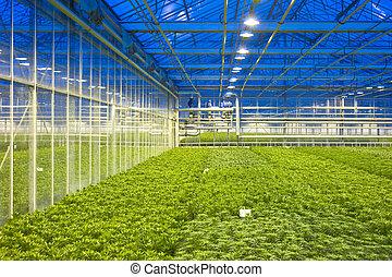 invernadero, control climático
