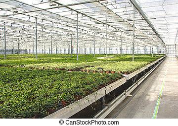 invernadero, cuarto de niños de la planta