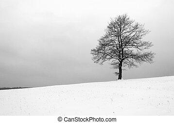 Inverno, árvore,  -,  b&w,  iin, prado