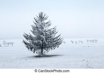 inverno, -, árvore, campo, gelado, asseado, paisagem