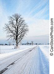 inverno árvore, estrada