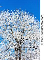 inverno árvore