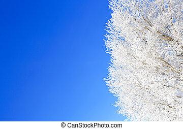 inverno árvore, ramo, gelado