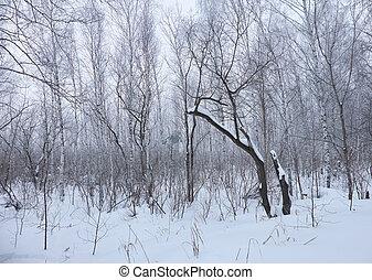 inverno, árvores nuas, sem, folhas, sob, neve