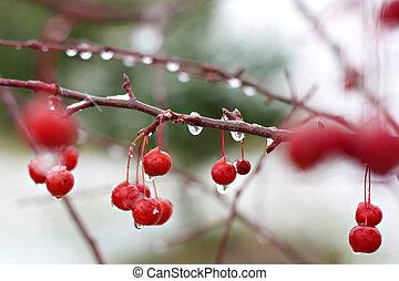 inverno albero, crabapple