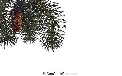 inverno, albero pino, fondo, o, bordo