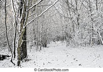 inverno, bosque, neve