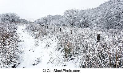 inverno, campagna, scena