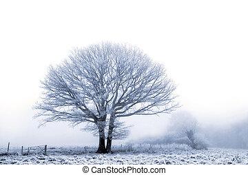 inverno, carvalho
