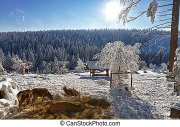 inverno, deers, kaltenbronn, floresta, pretas, paisagem, ...