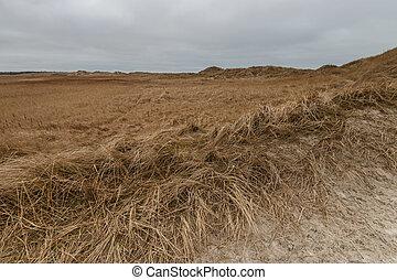 inverno, dunas, st., nublado, peter-ording, dia
