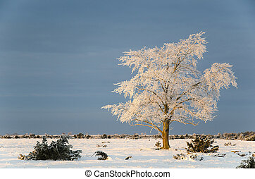 inverno, elm, grande, solidão, paisagem árvore