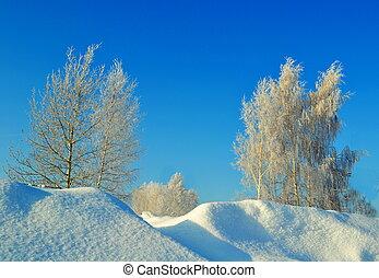 inverno, em, a, forest-steppe