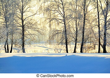 inverno, em, um, birchwood