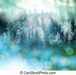 inverno, floresta
