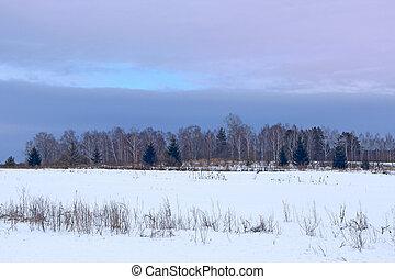 inverno, floresta, nuvens, acima, blueish, paisagem, rural