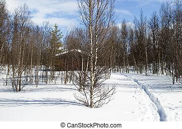 inverno, foresta, cabina