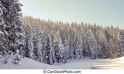 inverno, foresta pino