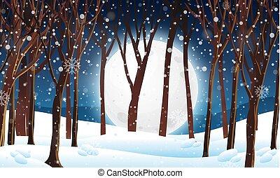 inverno, foresta, scena, notte
