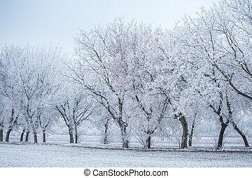 inverno, geada, -, árvores, campo, paisagem, fila