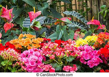 inverno, jardim botanic