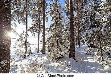inverno, lakeside, sol, árvores, através, brilhar