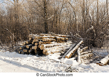 inverno, madeira