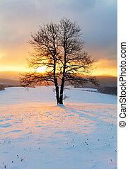 Inverno, natureza,  -, árvore, paisagem, sozinha, amanhecer