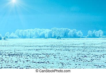 inverno, nebuloso, e, sunshiny, paisagem.