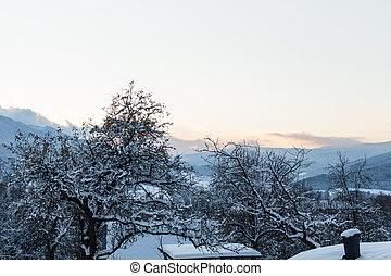 inverno, nevado, árvores., árvores, paisagem, gelado, morning., floresta