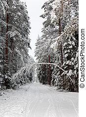 inverno, neve, floresta