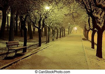 inverno, noite, a, parque