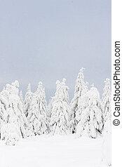 inverno, orlicke, tcheco, árvores, república, montanhas