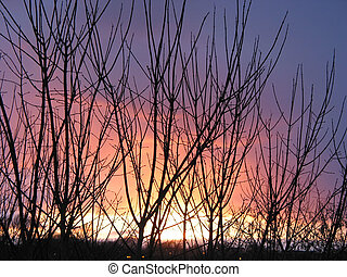 inverno, pôr do sol, através, a, árvores