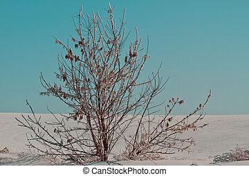 Inverno, paisagem