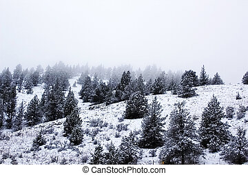 Inverno, paisagem, cena