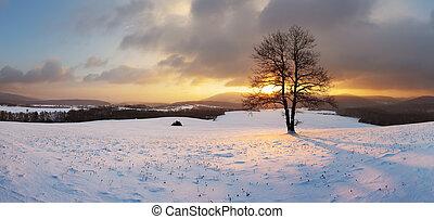 Inverno,  panorama,  -, árvore, neve, sozinha, paisagem