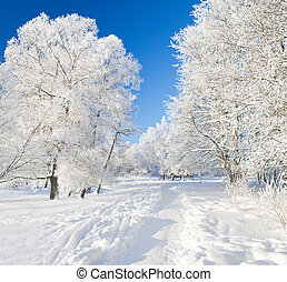 inverno, parco, in, neve