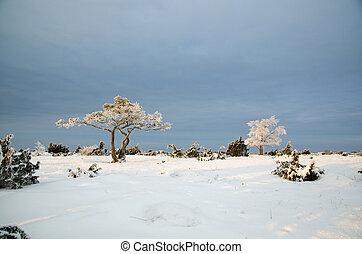 inverno, planície, árvores, gelado, paisagem, vista